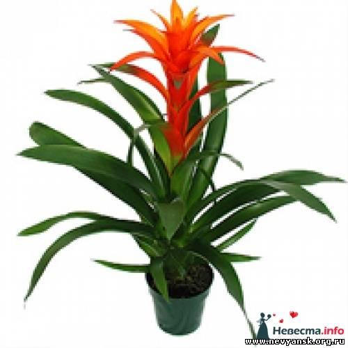 Цветы домашние тропические